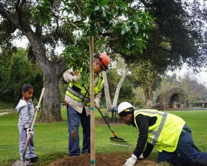 Photo of young child holding shovel next to two public works team members planting small tree in the ground